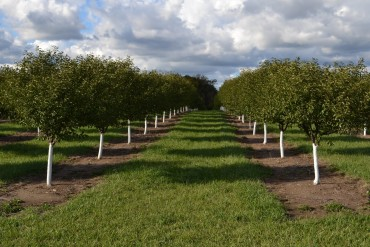 Orchards are looking good