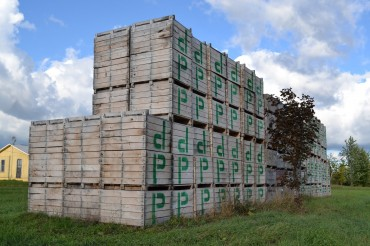 Extra large crates for the grapes