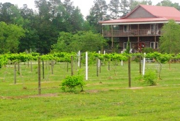 Grapefull Sisters Vineyard and Carrollwoods RV Park